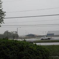 Rainy Day, Уайт-Оак