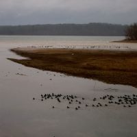 Good Day for Ducks on Pickwick Lake, Фингер