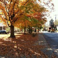 fall foliage, Франклин