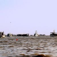 Many Oyster Luggers Dredging for Oysters to Transplant, Алдайн