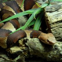 Snake House @ Gladys Porter Zoo, Браунсвилл