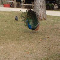 Texas Zoo, Викториа