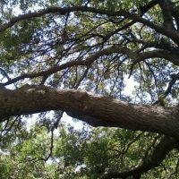 Tree, Гарленд