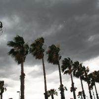 Del Rio, Palms Under The Storm, Дель-Рио