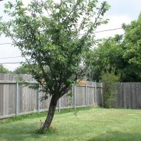 Backyard Tree, Дир-Парк