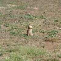 Prairie Dog Land, Лаббок