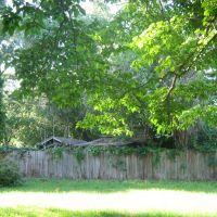 Ivy Fence 2, Либерти