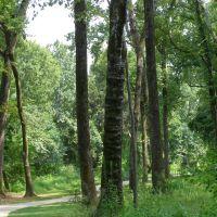 Cool Tree, Лонгвью