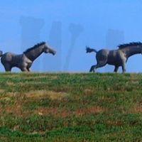 MacKenzie Park Horses, Нью-Хоум