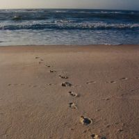Footsteps in the Sand - 2004, Одем