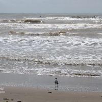 Mustang Island, Corpus Christi, Texas, USA, Одем