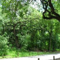 San Antonio.Brackenridge Park, Олмос-Парк