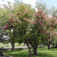 Blossom Trees, Олмос-Парк