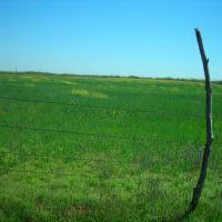 Field in Olney, Олни