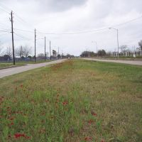 LBJ Wildflower Project - Phlox - East Orem Drive - Houston, Tx, Пирленд