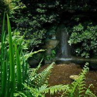 Japanese Gardens at Zilker Botanical Garden, Austin, TX, Роллингвуд