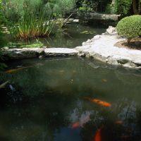 Zilker Park Botanical Japanese Garden, Роллингвуд