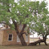 #8 tree, fort concho, texas, Сан-Анжело