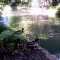 waiting their turn on the riverbank San Antonio,Texas USA, Сан-Антонио