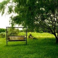 Swing Under Mezquite Tree, Falfurrias, Texas, USA, Тафт