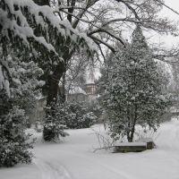 Krügerpark im Winter, Террелл
