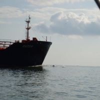 Houston Ship Channel - ship with bow riding dolphins 20090815, Тралл