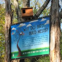 Why Do Birds Build Nests? .... and why dont you try it too?, Фармерс-Бранч