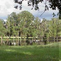 cypress pond, Saturn road, Hernando County, Florida (9-4-2002), Азали-Парк