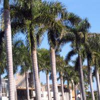 Palm Trees, Бал-Харбор