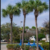 Sarasota, Blue pipes 2011:02:02, Би-Ридж
