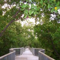 Mangrove Park Walkway 2, Бойнтон-Бич