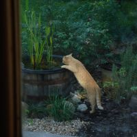 Ang has a drink from the water garden, Бока-Рейтон