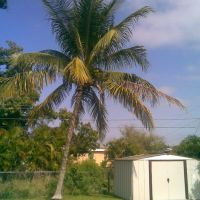 Coconut Palm, Бродвью-Парк