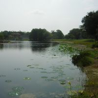 Shrinking Lake @ Beautiful Heritage Park, Plantation Fl., Бродвью-Парк