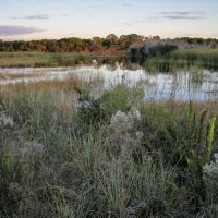 Stoneybrook Wetland, Вамо