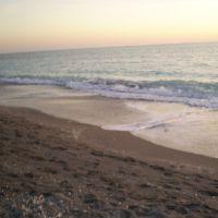 Turtle Beach, Вамо