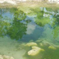 Joes Sink Fish, Векива-Спрингс