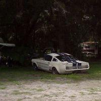 1966 Shelby GT350 in trailer park, NOT FOR SALE but it was, Brooksville Fla (2003), Виргиниа-Гарденс
