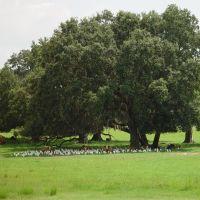 staying out of the heat, Masaryktown, Hernando County, Florida (8-23-2007), Виргиниа-Гарденс