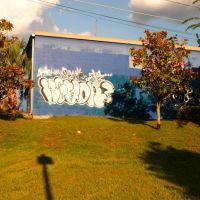 Graffiti, Гайнесвилл