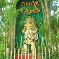 Tiger Falls at the Palm Beach Zoo, Глен-Ридж