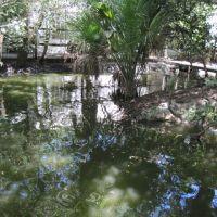 bridge in the jungle, Глен-Ридж