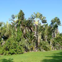 Dreher Park landscape, Глен-Ридж