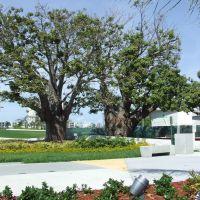 Trees at Young Circle Park, Голливуд