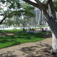 Young Circle Park, Голливуд
