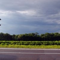 2014 05-30 Florida - grape arbors, Довер