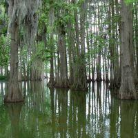 Cypress Grove - Lake Thonotosassa, Florida, Довер