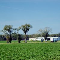 2012, Plant City, FL - Along Rte 60 - strawberry fields, Довер