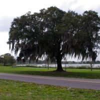 2014 03-05 Winter Haven, Florida - Lake Dr., Инвуд