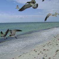 Feeding the seagulls, Индиан-Рокс-Бич